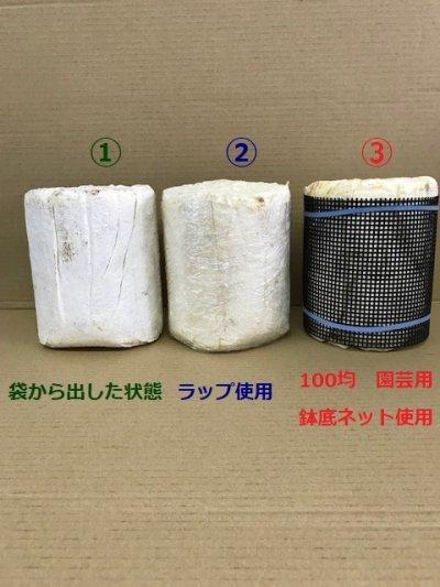 画像2: 産卵用 ニクウスバ菌糸 Mサイズ 1本