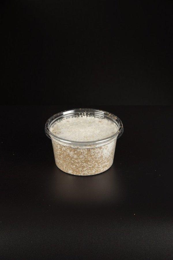 画像1: オオヒラタケ菌糸プリンカップ 250cc 1個 (1)