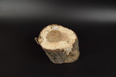 画像1: 【B品】植菌カワラ材LLサイズ 1本
