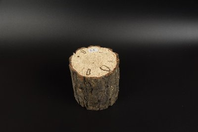 画像1: 植菌カワラ材Mサイズ 1本