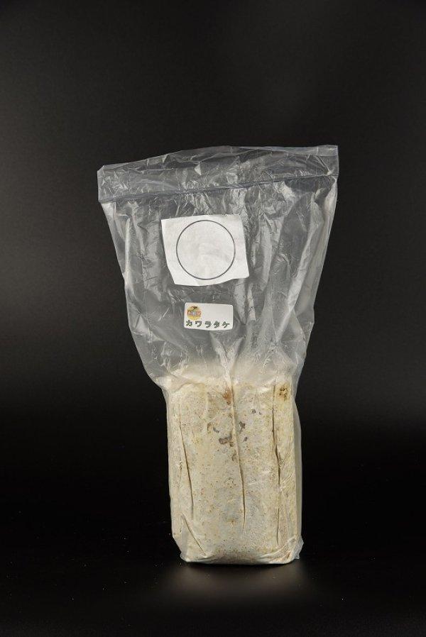 画像1: 産卵用 カワラ菌糸 Mサイズ 1本 (1)