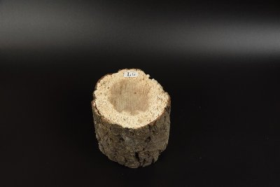 画像1: 【規格外品】植菌カワラ材 L以上 1本