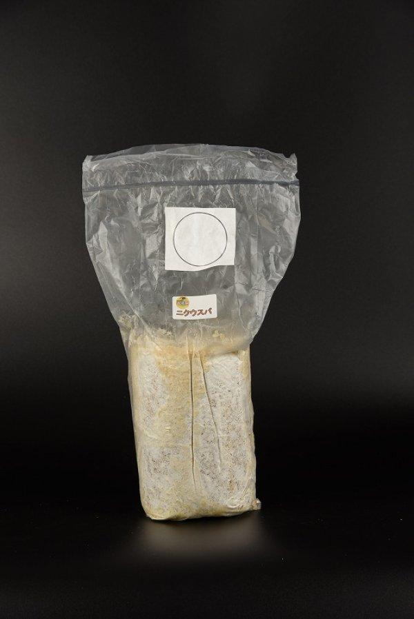画像1: 産卵用 ニクウスバ菌糸 Mサイズ 1本 (1)