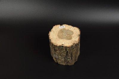 画像1: 【B品】植菌カワラ材Lサイズ 1本